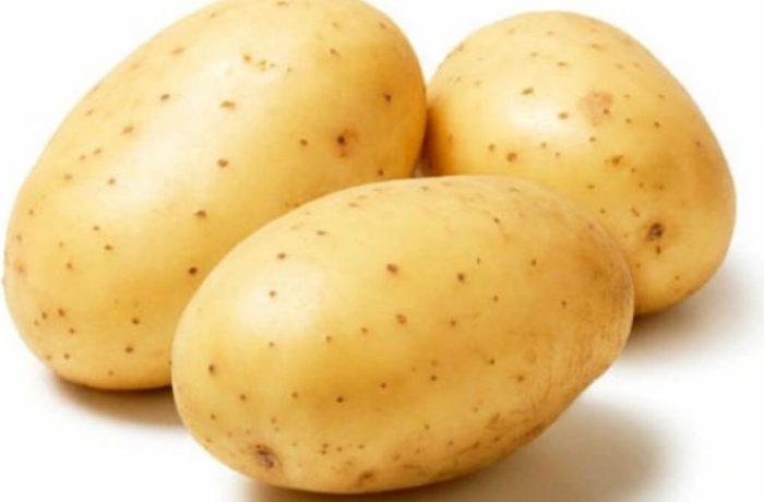 Семенной картофель «ЛАТОНА»