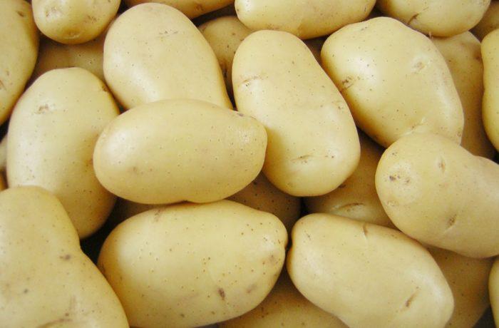 Семенной картофель «Импала»